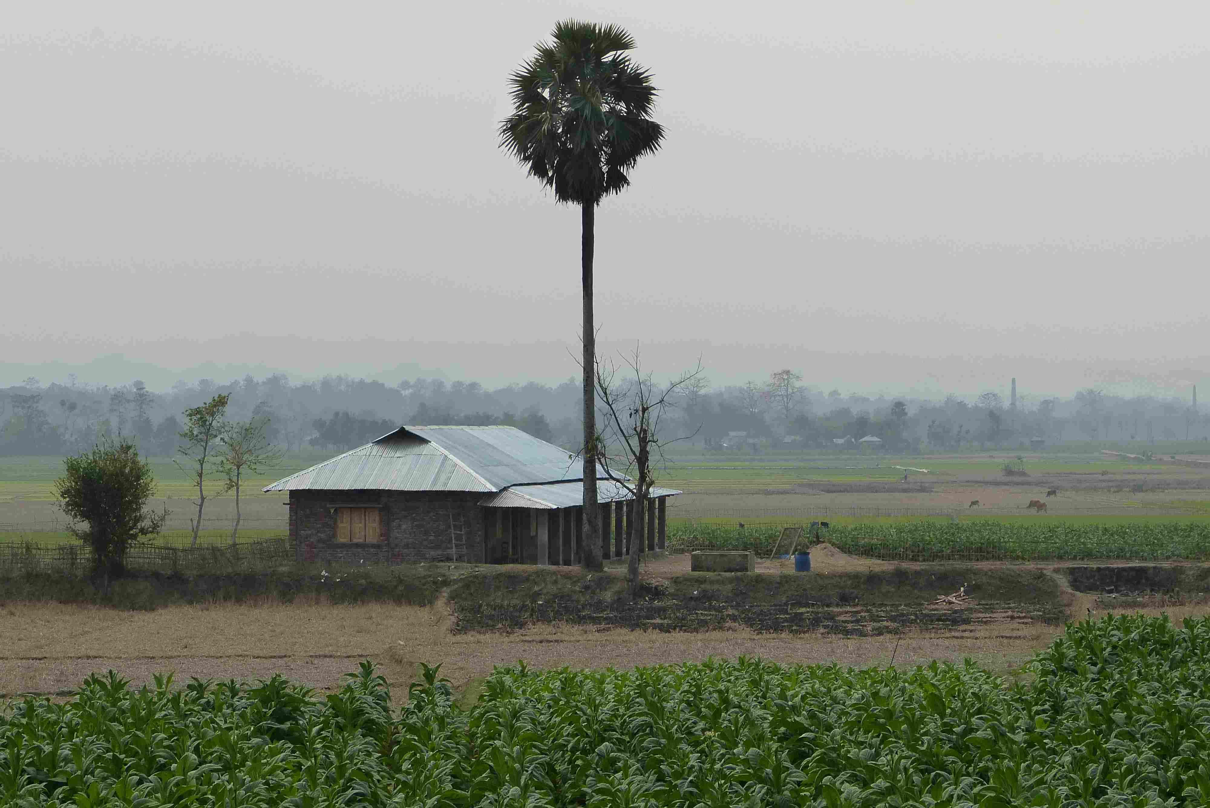 le collège de Tarabunia, petit village isolé du Bangladesh
