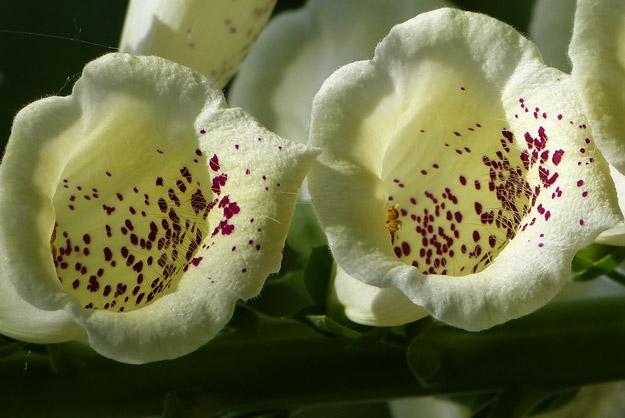 fleurs_11