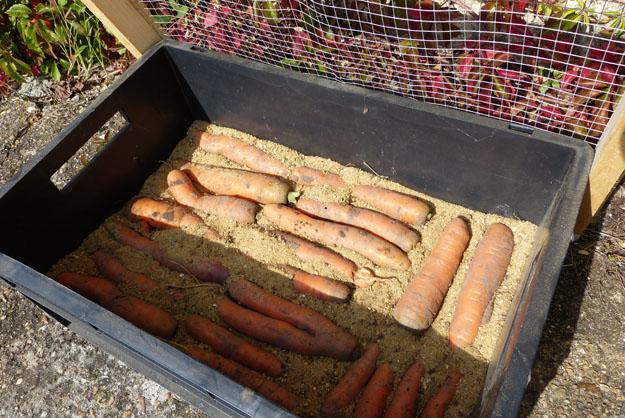 cuisine_carottes