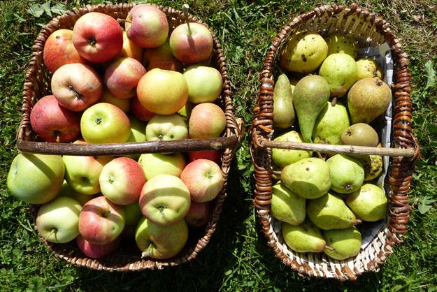 saisons_pommes-poires