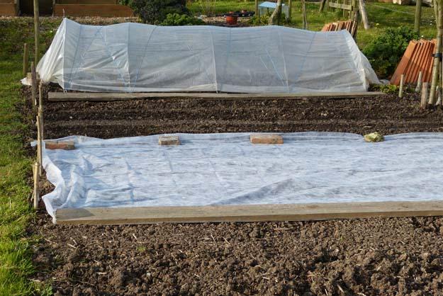 semis protégés par voile et tunnel