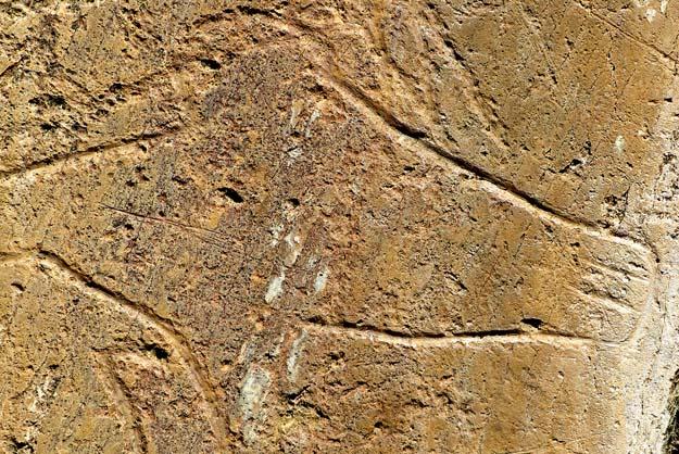 Tête de cheval gravée sur un rocher, vallée du Côa